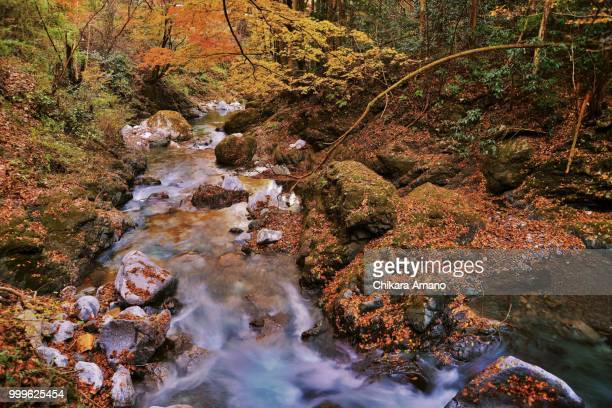 Valley stream in a late fall