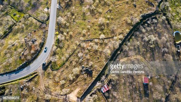 valley with blooming cherry trees - estremadura stock-fotos und bilder