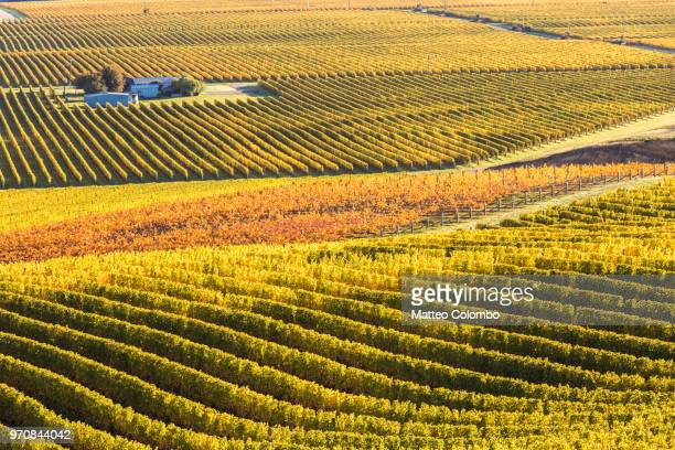 valley with vineyards in autumn, marlborough, new zealand - marlborough new zealand stock pictures, royalty-free photos & images