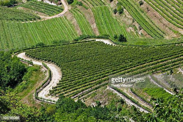 Valpolicella Vineyards, Italy