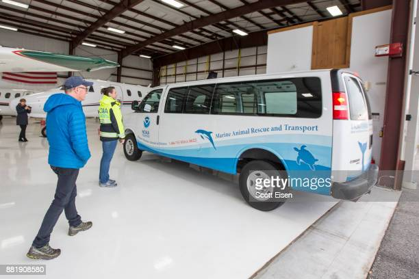 A van carrying 30 Kemp's ridley sea turtles the world's most endangered species of sea turtle arrives to the hangar at Marshfield Municipal Airport...
