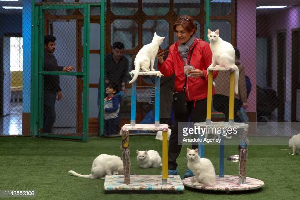Van cats are seen at specially designed swimming pool for cats at the Van Cat House that was founded by the Van Yuzuncu Yil University in Van Turkey...