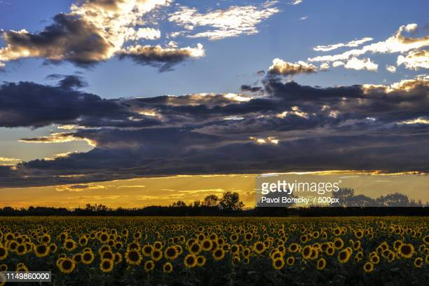 van gogh scenery near arles - bouches du rhone stock pictures, royalty-free photos & images