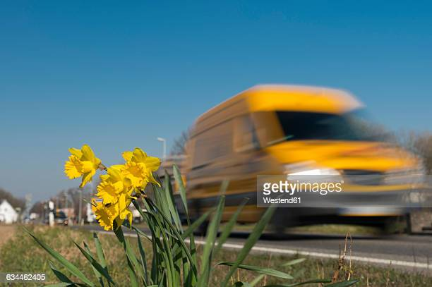 Van in motion passing daffodils at the roadside