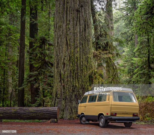 Van parked by redwood trees in forest, Humboldt, California, United States
