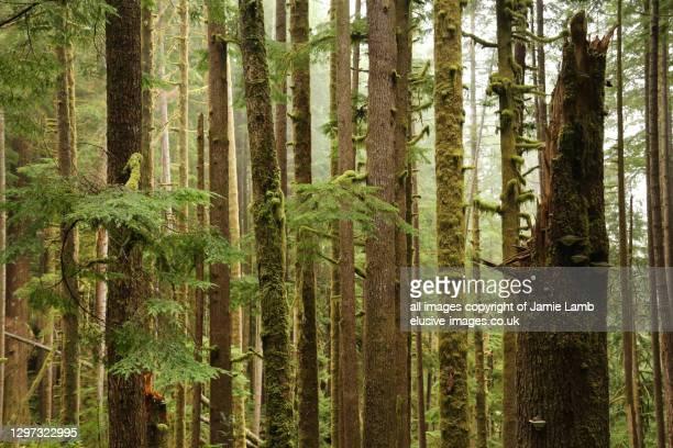 vancouver island, temperate rainforest - foresta temperata foto e immagini stock