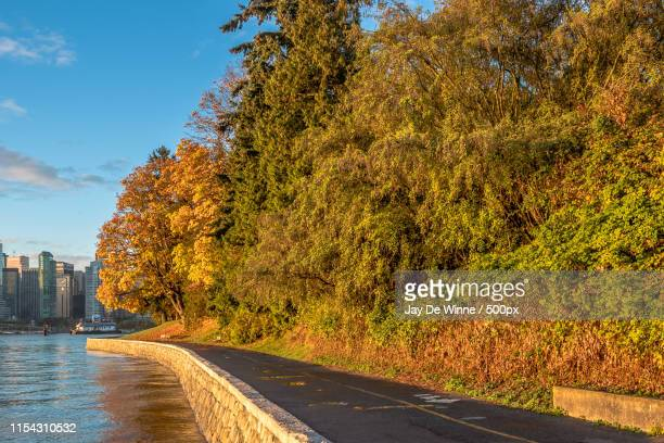 vancouver seawall stanley park autumn - seawall stock pictures, royalty-free photos & images