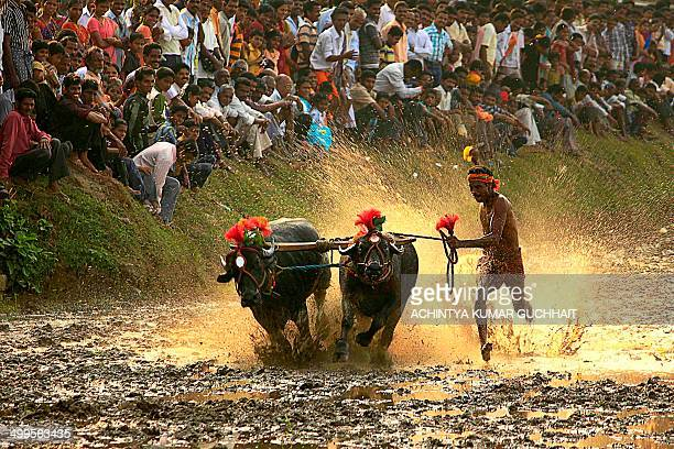 CONTENT] Vandar/Vandaaru is a village around 10 km from Kundapura This Kambala is special as there is no competition here but this is an exhibition...