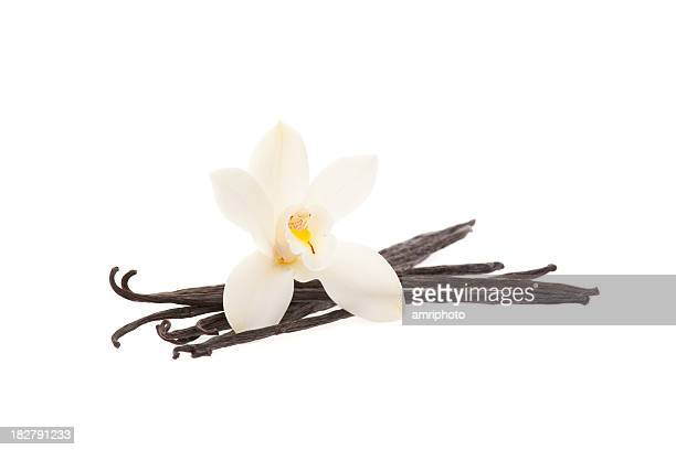 vanilla beans with orchid