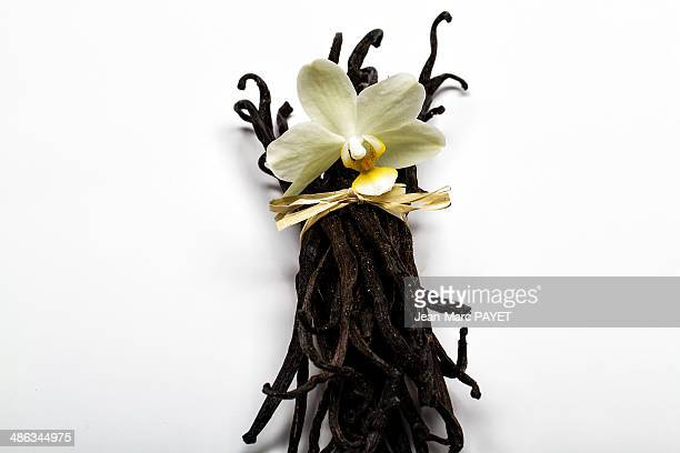 vanilla beans with orchid - jean marc payet stock pictures, royalty-free photos & images