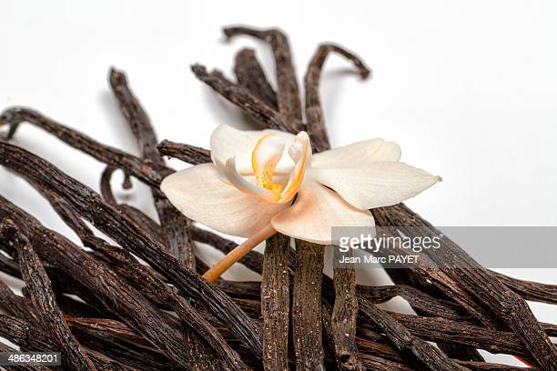 vanilla beans with orchid - jean marc payet foto e immagini stock