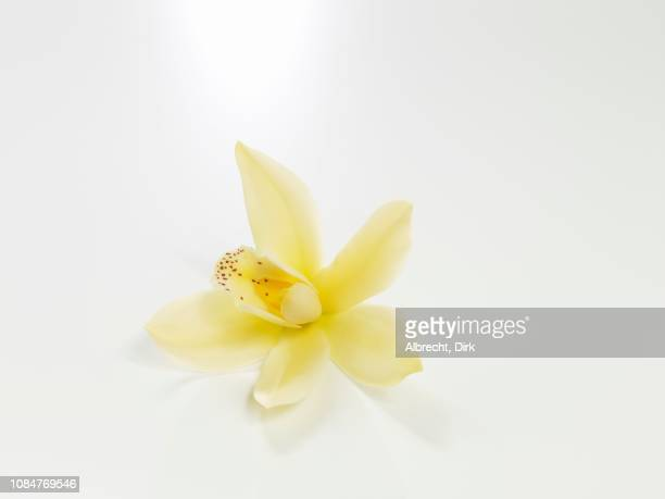 vanilla blossom on a white background - vanilla stock pictures, royalty-free photos & images