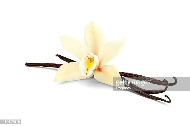 vanilla isolated on white