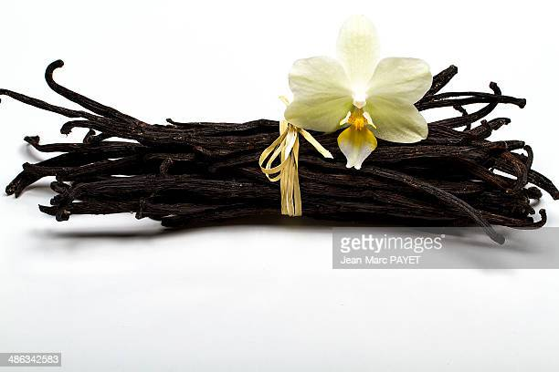 vanilla isolated on white with orchid - jean marc payet stockfoto's en -beelden