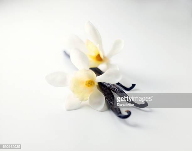 Vanilla pods with flowers on white background