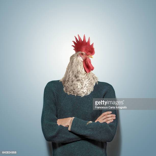 vanity - rooster stock pictures, royalty-free photos & images