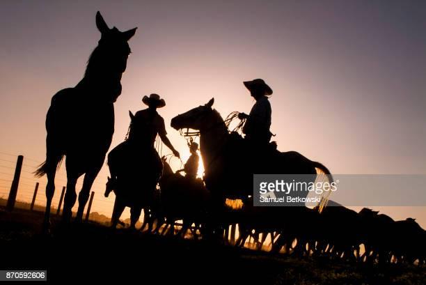 vaqueiros do pantanal manejando uma manada de cavalos pantaneiros em contraluz no final de tarde - mato grosso state stock pictures, royalty-free photos & images