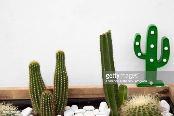 Varied cactuses