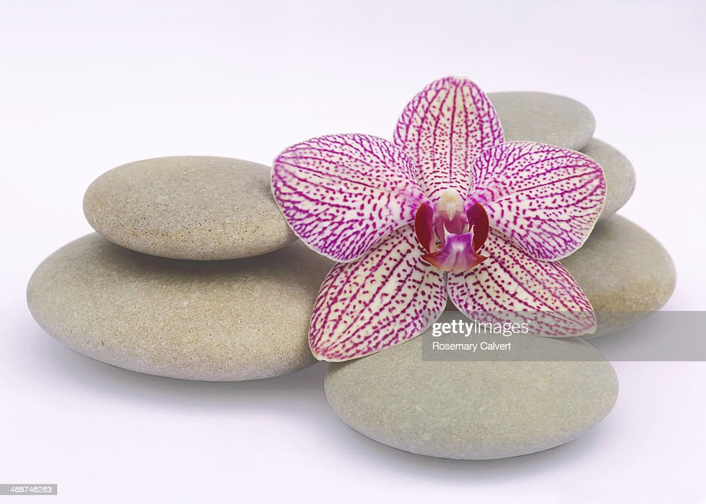 Variegated orchid with smooth, round pebbles : Stock Photo
