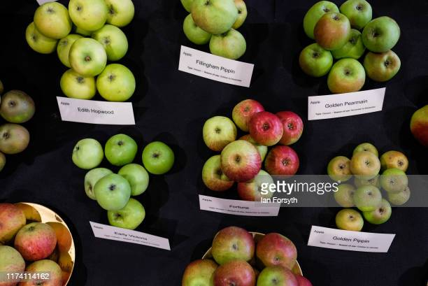 Varieties of apples are displayed during staging day for the Harrogate Autumn Flower Show on September 12 2019 in Harrogate England The UK's premier...