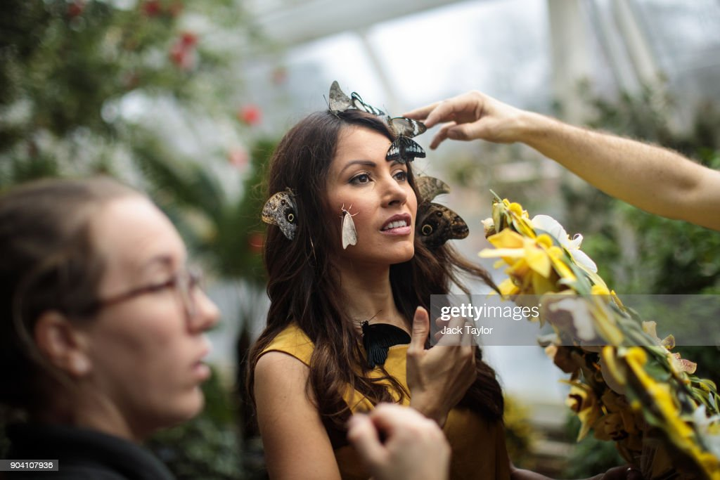 Varieties of butterfly are placed on the face of model Jessie Baker during a photocall at RHS Garden Wisley on January 12, 2018 in Woking, England. The Butterflies in The Glasshouse exhibit returns to the RHS Garden Wisley from January 13 - March 4 this year and features over 50 species of free-flying butterflies.