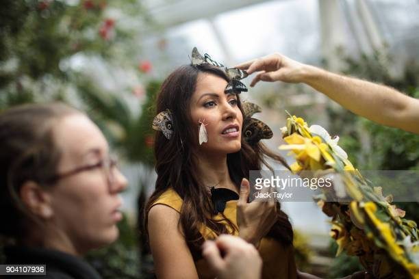 Varieties of butterfly are placed on the face of model Jessie Baker during a photocall at RHS Garden Wisley on January 12 2018 in Woking England The...