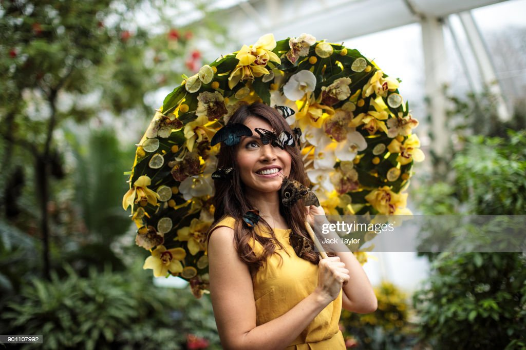Varieties of butterfly sit on the face of model Jessie Baker as she poses during a photocall at RHS Garden Wisley on January 12, 2018 in Woking, England. The Butterflies in The Glasshouse exhibit returns to the RHS Garden Wisley from January 13 - March 4 this year and features over 50 species of free-flying butterflies.