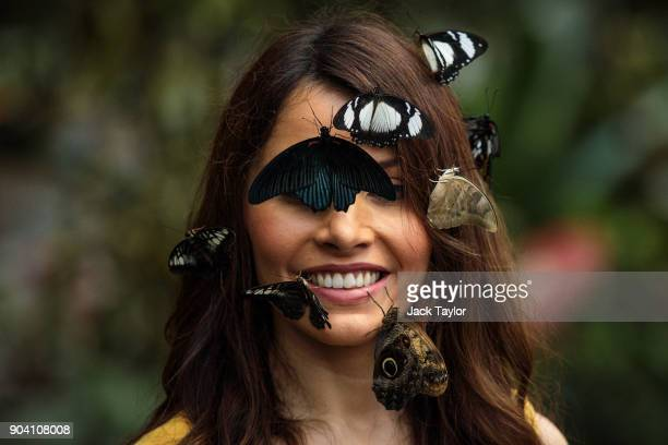Varieties of butterfly sit on the face of model Jessie Baker as she poses during a photocall at RHS Garden Wisley on January 12 2018 in Woking...