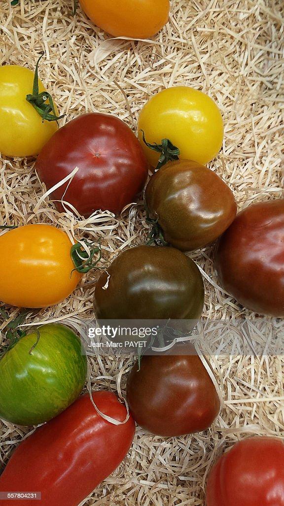 Varieties of heirloom tomatoes : Photo