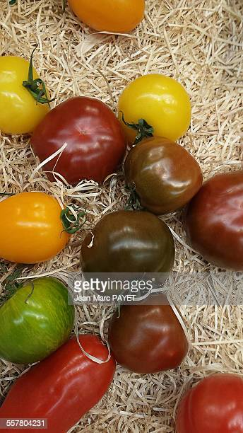 varieties of heirloom tomatoes - jean marc payet photos et images de collection