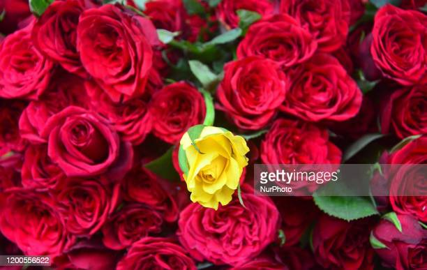 Varieties of Roses are put on sell in a street ahead of Valentines Day in Dimapur India north eastern state of Nagaland on Thursday 13 February 2020