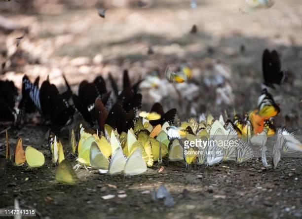 variety of butterflies - um animal stockfoto's en -beelden