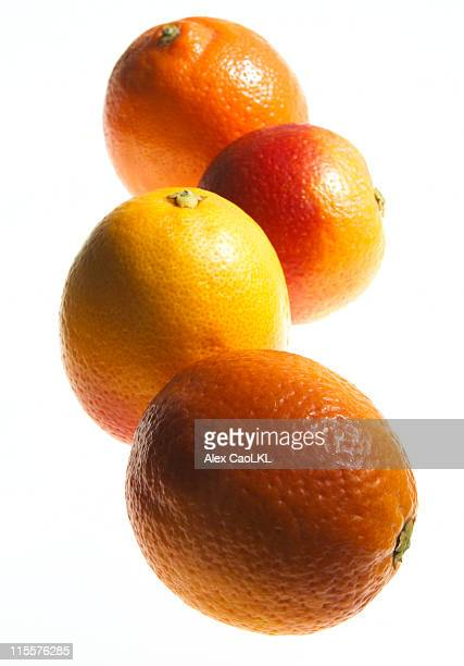 variety of citrus - navel orange stock photos and pictures