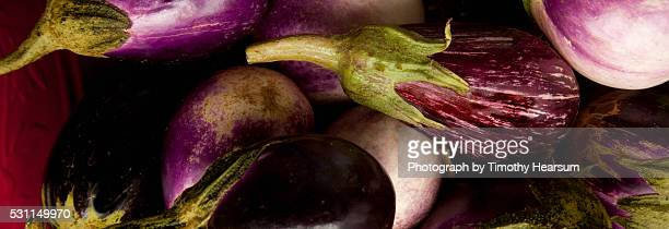 variety of eggplant - timothy hearsum bildbanksfoton och bilder