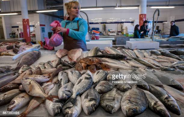 A variety of fish are seen while participants visit the local fish market during Gastronomic FAM Tour on November 30 2017 in Ilhavo Portugal...