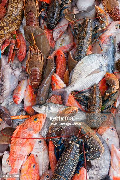 Variety Of Fish On The Fishing Port Of Atlantic Coast