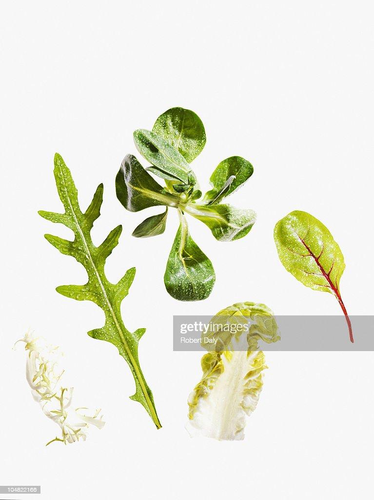 さまざまな緑の葉レタス : ストックフォト