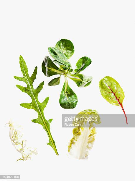 variety of green leaf lettuce - lettuce stock pictures, royalty-free photos & images