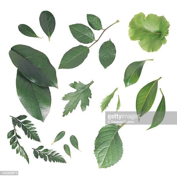 Variety of Leaves