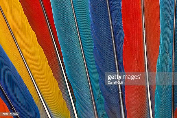 Variety of Macaw Tail Feathers in Pattern