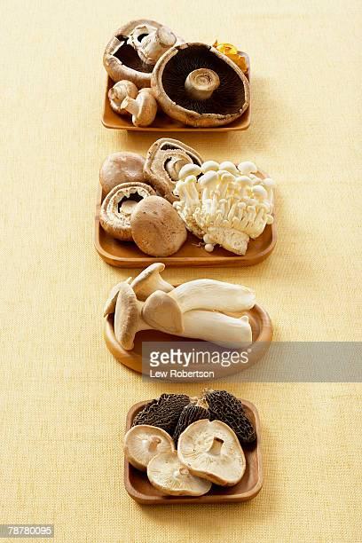 variety of mushrooms - enoki mushroom stock pictures, royalty-free photos & images