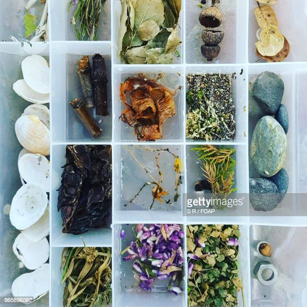 Variety of nature collection in box