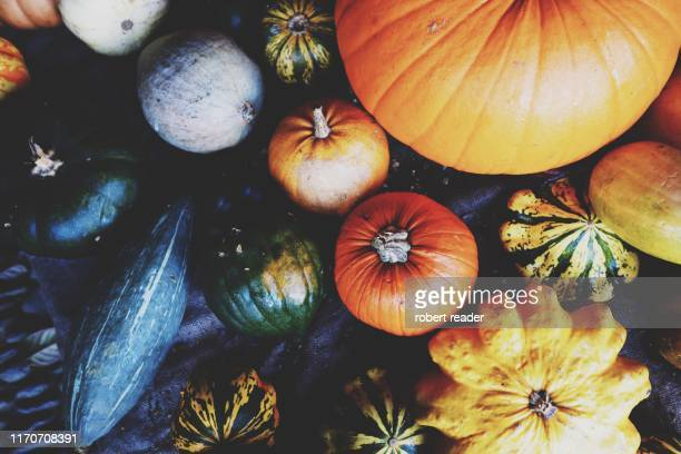 variety of pumpkins and squash - herbst winter kollektion stock-fotos und bilder