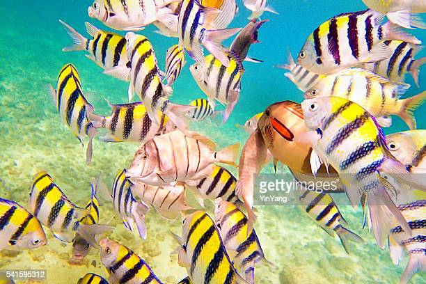 variety of reef fishes in beaches of kauai hawaii - kauai stock photos and pictures