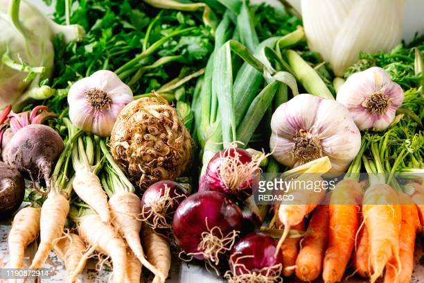 Variety of root garden vegetables carrot garlic purple onion beetroot parsnip and celery with tops over white marble background