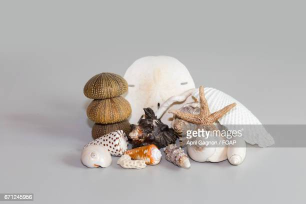 Variety of seashell in gray background