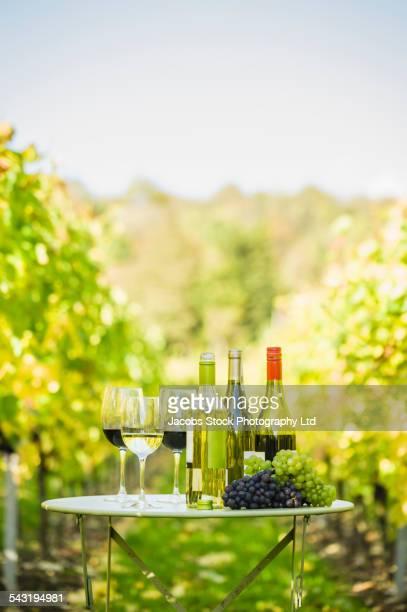 variety of wine for tasting on table in vineyard - chardonnay grape - fotografias e filmes do acervo