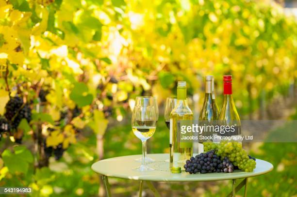 variety of wine for tasting on table in vineyard - chardonnay grape fotografías e imágenes de stock