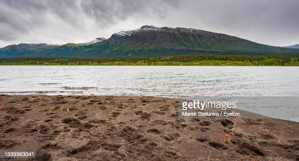 various animal footprints at the bank of tuaton lake in spatsizi plateau wilderness provincial park - marek stefunko stock pictures, royalty-free photos & images