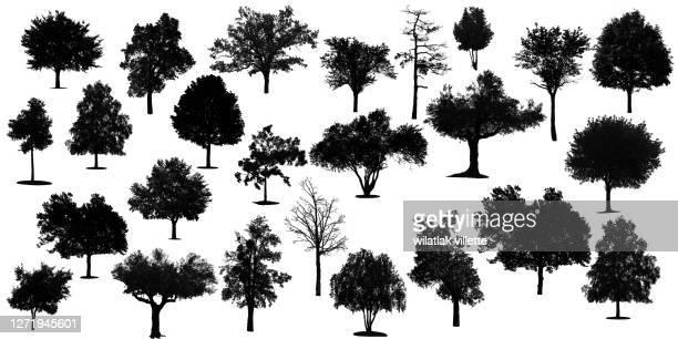 various black tree silhouettes on white background. - herbst winter kollektion stock-fotos und bilder